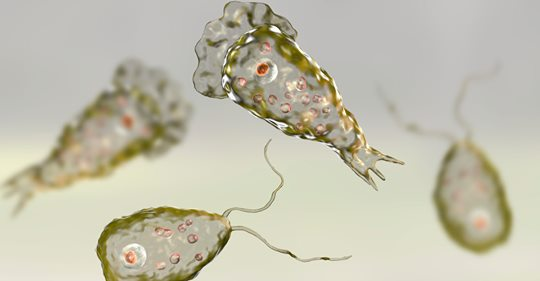 Brain-eating amoeba found in Louisiana drinking water again