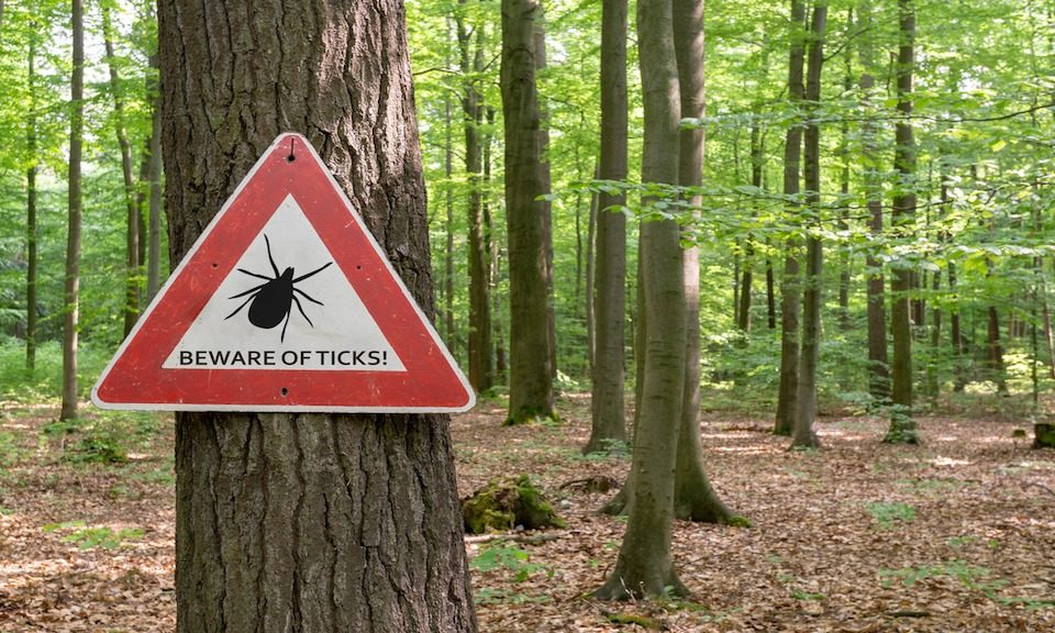 Weaponized Ticks - Lyme Disease An Escaped Government Bioweapon