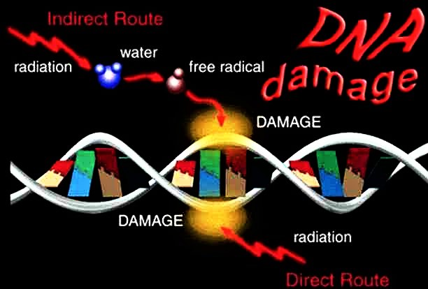 Space Radiation Risks to the Human Body and your DNA